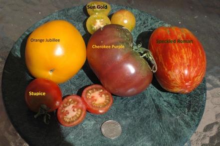 tomatolineup
