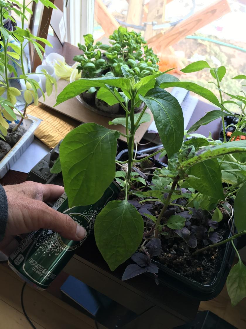drinky_plants